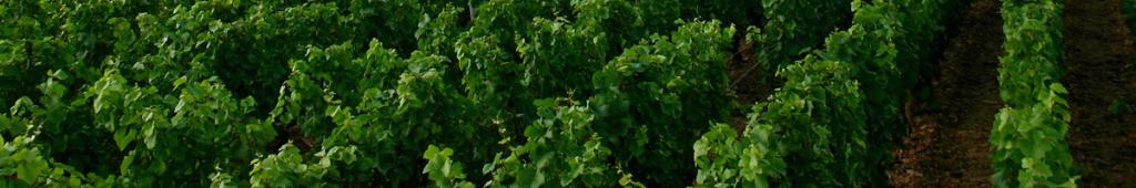 marke med oversøisk vin
